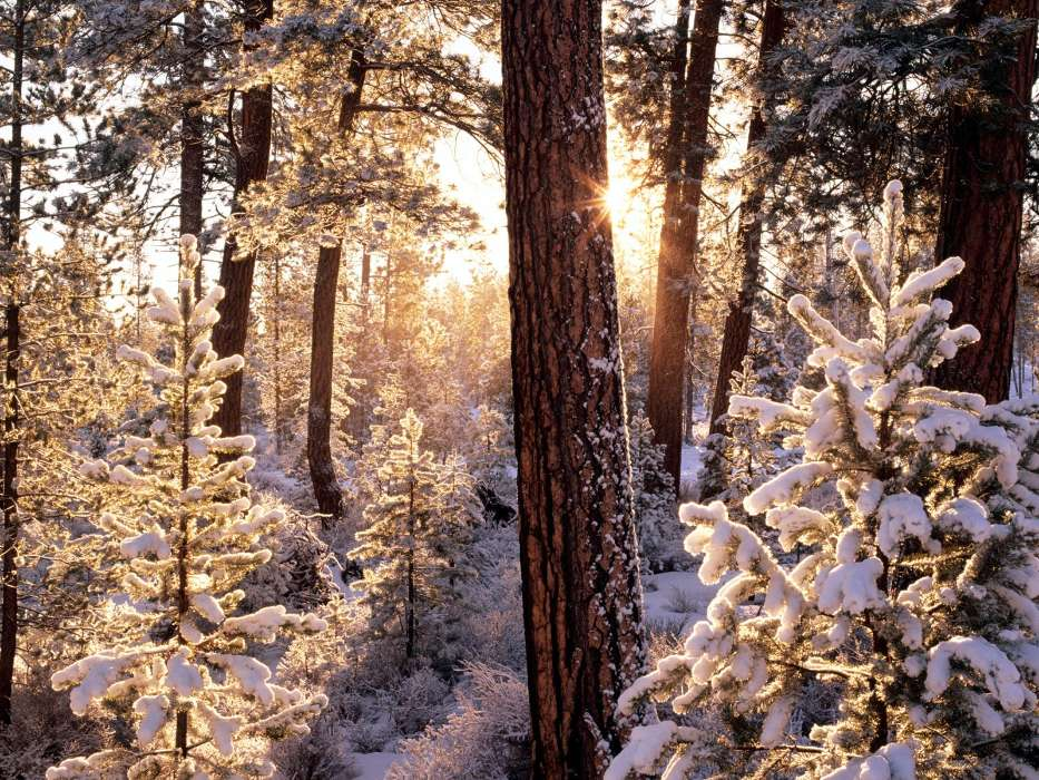 Landscape, Winter, Trees, Snow, Fir-trees