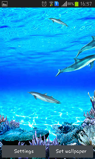 Captura de tela do Dolphins sounds em telefone celular ou tablet.
